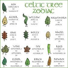 Celtic Tree Chart The Celtic Tree Zodiac Celtic Tree Celtic Symbols Celtic