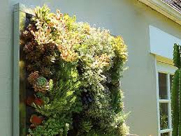 Floraframe Living Wall Kits From Plants on Walls