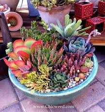 Small Picture Best 25 Succulent arrangements ideas only on Pinterest