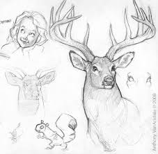 This Is A Nice Sketch Of A Male Deer With Antlers Drawn By Canadian
