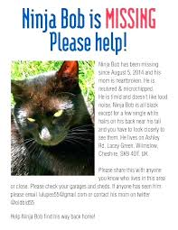 Lost Cat Flyer Lost Pet Flyers Missing Cat Dog Poster Template Archive Uk