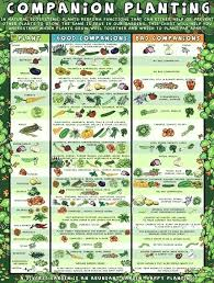 Companion Planting Chart Vegetable Garden Companion Planting Chart Cuddlebabes Info