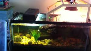 Turtle Tank Decor Aquarium Setup For Two Adult Aquatic Turtles Res False Map