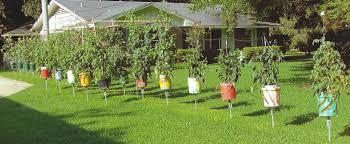 bucket gardening. Awesome Astounding Ideas Bucket Gardening Interesting Decoration Handy Gardener Grows Buckets Of Produce E