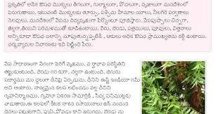 telugu web world advantages and use of neem tree