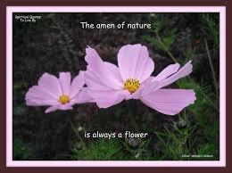 Flower Quotes Awesome The Amen Of Nature Is Always A Flower