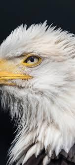 Eagles iPhone XR Wallpaper Download