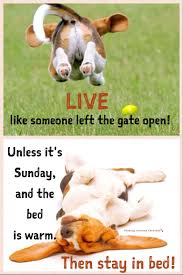 sunday humor dog funny happiness relax enjoy life good morning have a wonderful relaxing sunday