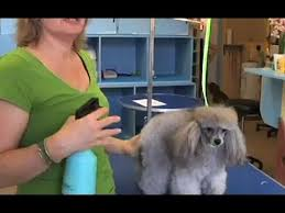 <b>Dog Grooming</b> Tips - How to <b>Brush</b> Your <b>Dog's Hair</b> - YouTube