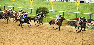 Preakness Stakes Tickets 2019 Vivid Seats