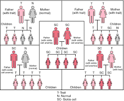 Sickle Cell Anemia Inheritance Pattern Beauteous Sickle Cell Disease Definition Of Sickle Cell Disease By Medical