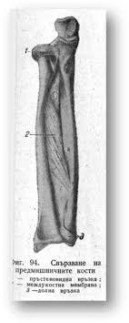 Кости на ръката Реферат от Биология Страница  Съответно на формата на ставните повърхности в отделните части на лакътната става са възможни различни по посока и размери движения