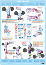 Details About Leg Muscles Weight Training And Body Building Poster Exercise Training Chart