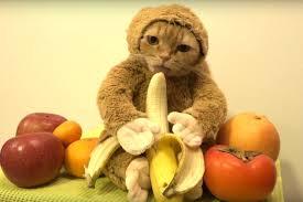 """Résultat de recherche d'images pour """"costume pour chat"""""""