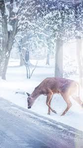 nb26-christmas-deer-street-snow-winter ...