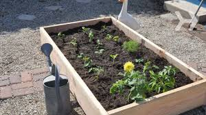 Small Picture How to Plant a Vegetable Garden YouTube