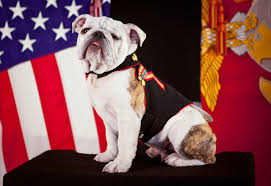 dog breeds usa breed dogs picture most por dog breeds in united states of america usa dogs dad
