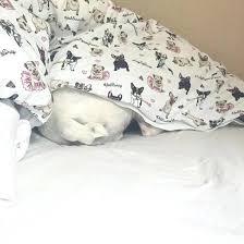 dog print baby bunny crib sheets bunny bedding set home accessory yeah bunny bedding bedding pillow queen bedding bedding sleep cute pugs