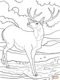 Small Picture Exquisite Coloring Pages Draw A Deer 24 mosatt