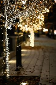 Little White Christmas Lights White Lights Around Trees Christmas Decorations Christmas