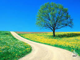 beautiful background images for desktop. Plain Desktop Beautiful Spring Desktop Background Intended Images For