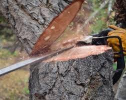 Мешканця Новопсковського району обвинувачують в незаконній порубці дерев у захисному лісовому насадженні