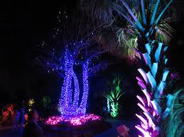 Naples Botanical Gardens Night Lights December 21 Bird Travel Photos Birding Sites Bird Information Night