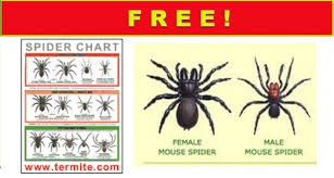 Free Spider Identification Chart Get A Free Spider Identification Chart Free Samples By