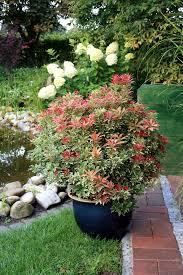 Rentel Garten Und Landschaftsbau Welche Pflanzen Als Sichtschutz