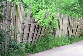 Climbing Plants For Fences  Home Design U0026 Architecture  CilifcomClimbing Plants For Fence