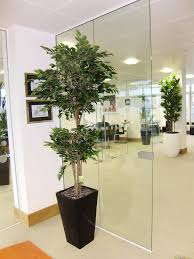 office tree. Artificial Ficus - Plants Office Tree O
