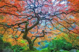 art images of nature. Perfect Nature Amazing Trees Nature Photography On Art Images Of E
