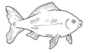 Disegni Da Colorare Animali Marini Disegni Per Bambini Disegni