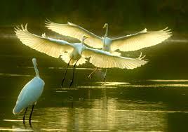 Kết quả hình ảnh cho cánh cò và dòng sông