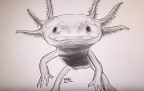 We would like to show you a description here but the site won't allow us. How To Draw An Axolotl Step By Step Easy Easy Animals To Draw