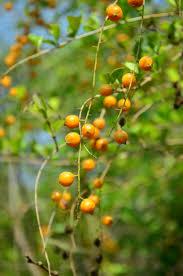FRUIT TREE DESCRIPTIONSSmall Orange Fruit On Tree