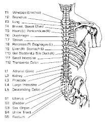 Spine Acupressure Points Acupuncture Acupuncture Benefits
