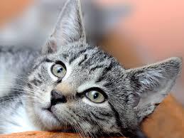 """Résultat de recherche d'images pour """"chat """""""