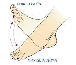 Resultado de imagen de flexión dorsal