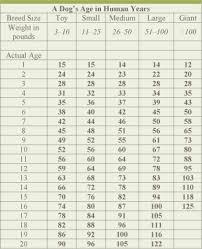 Dog Age In Human Years Chart Dog Aging Chart Goldenacresdogs Com