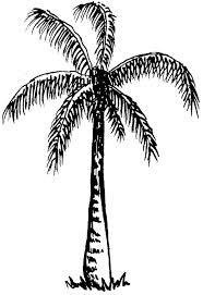 download image tree drawing tumblr free download clip art on clipart library black and white palm trees l38 and
