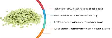 since green coffee bean extract helps manage obesity it indirectly controls the onset of type 2 diabetes