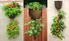 upside down hanging planter upside down tomato planter and patio garden system elegant with hanging tomato
