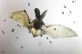 Are Bats Blinded By Light 1x Bat By Jimmy Hoffman Beautiful Macro Photography