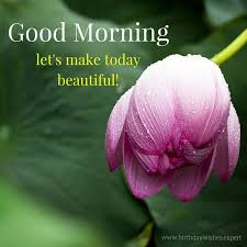 40 Good Morning Images With The Most Beautiful Flowers Fascinating Beautiful Madam In Beautiful Garden Quotes