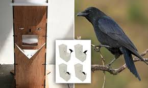 Crow Vending Machine Inspiration The Crow Box Feeder Trains Birds To PAY For Their Food Daily Mail