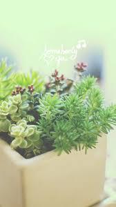Nature Vitality Aesthetic Fleshy Plant ...