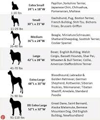 Mastiff Height Chart Pin By Jemma Obrien On Doggy Day Care Dog Size Chart