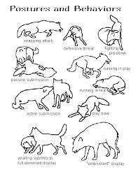 Wolf Body Language Chart Postures Behaviors Wolf Love Wolf Spirit Wolf