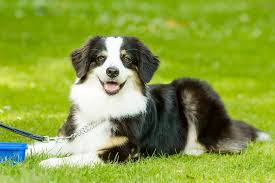 Vomiting of Yellow Mucus in Dogs - Symptoms, Causes, Diagnosis ...